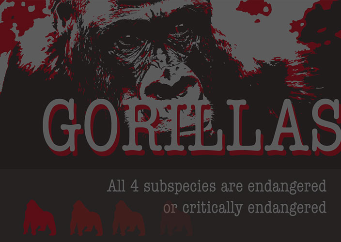 Save the Gorillas Infographic