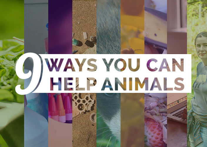 What Can I Do to Help Save Animals?